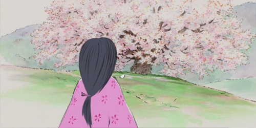 Kaguya-hime cherry blossoms